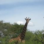 Rwanda Pictures 070